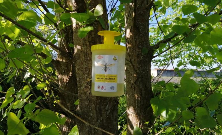 camara-da-marinha-grande-coloca-200-armadilhas-para-vespa-asiatica
