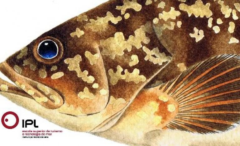 manual-ilustrado-dedicado-aos-peixes-das-berlengas-apresentado-hoje-na-estm-2203