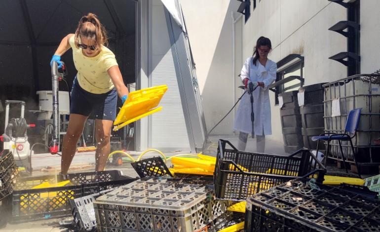 Selecção do plástico recolhido no mar
