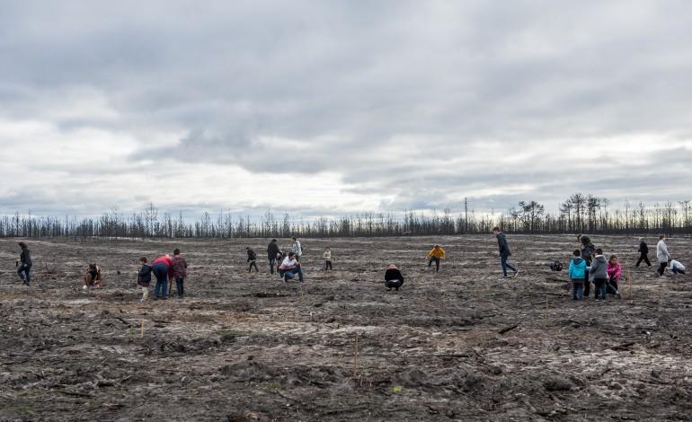 epson-vai-plantar-1000-arvores-no-pinhal-de-leiria