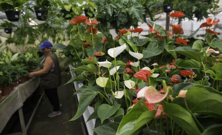 sector-das-plantas-e-flores-naturais-com-prejuizos-de-180-milhoes-de-euros