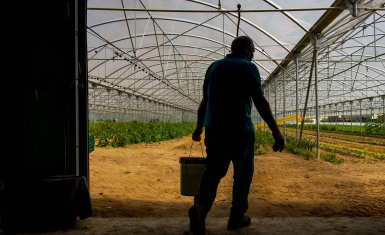 area-cultivada-no-vale-do-lis-esta-a-aumentar-desde-2014