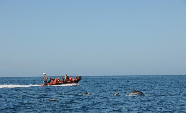 golfinhos-moram-no-rio-sado-mas-jantam-ao-largo-da-nazare