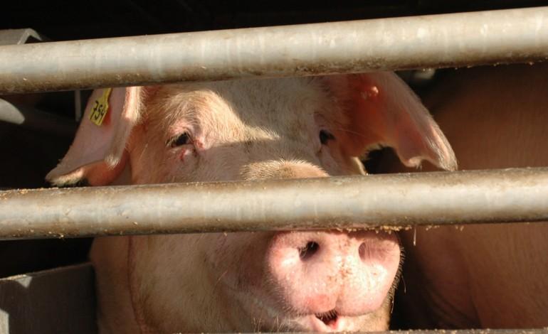 suinicultores-afirmam-ja-ter-financiamento-para-a-estacao-de-tratamento-8599