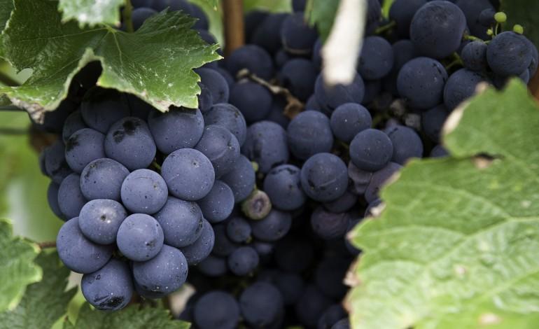 caldas-da-rainha-recebe-forum-anual-de-vinhos-de-portugal