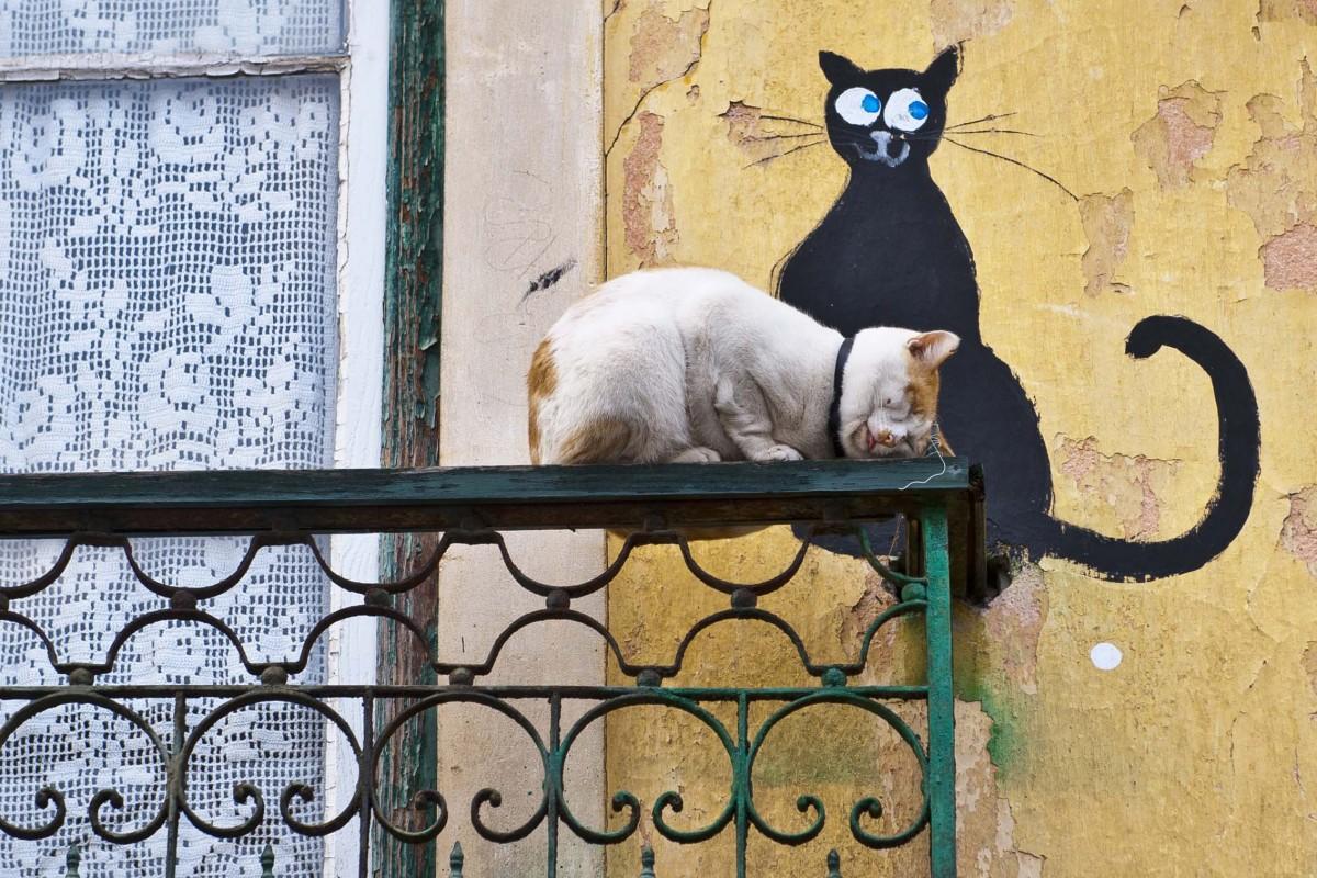 dois-gatos-leiria-2014