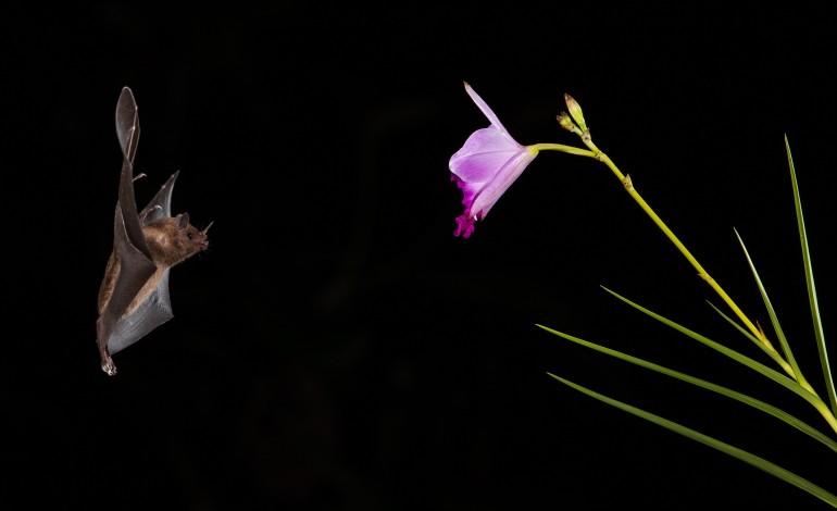 paul-da-tornada-explica-a-vida-dos-morcegos-e-das-borboletas-nocturnas