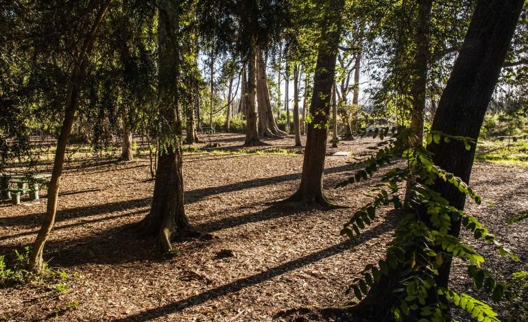 conferencia-em-ansiao-demonstra-potencial-da-floresta