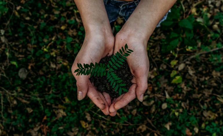 quase-tres-mil-arvores-plantadas-junto-as-margens-do-lis-e-do-lena