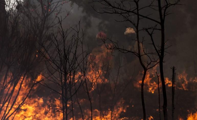 mais-de-250-bombeiros-combatem-fogo-em-zona-de-mato-em-ourem