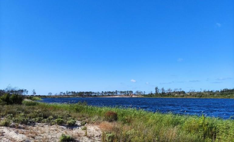 Árvores da Lagoa da Ervedeira precisam da sua ajuda para sobreviverem ao calor