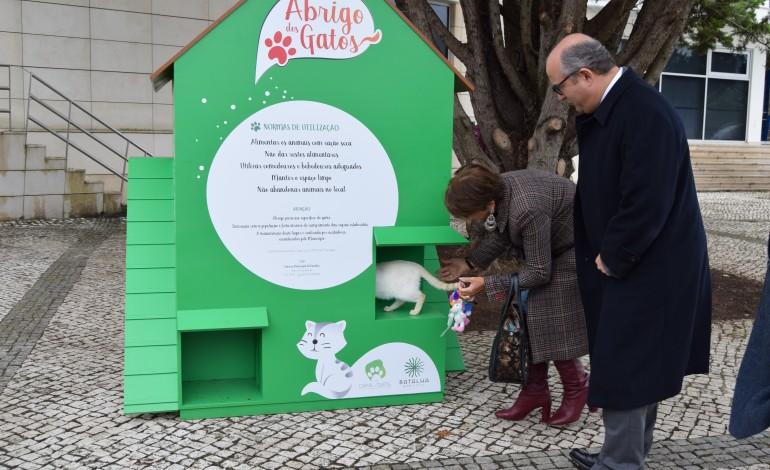 municipio-da-batalha-cria-infra-estruturas-para-acabar-com-gatos-sem-abrigo-na-batalha