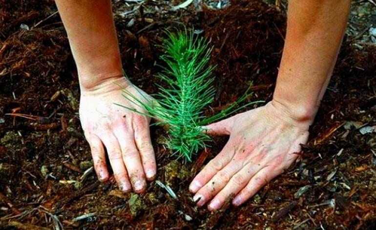 condicoes-meteorologicas-adiam-plantacao-de-pinheiros-em-antigo-aterro-no-juncal